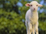 A parábola da ovelha perdida