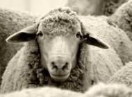 Por que é difícil ser pastor hoje? (parte 3)