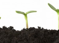 Maturidade Espiritual: para o proveito eterno