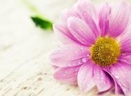 Além das pétalas de uma flor